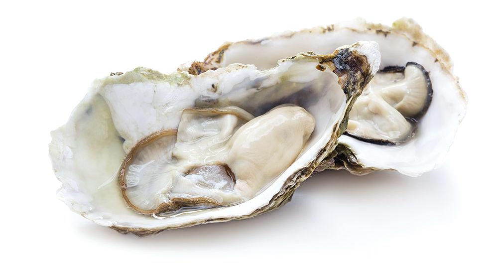 Bild von einer Auster