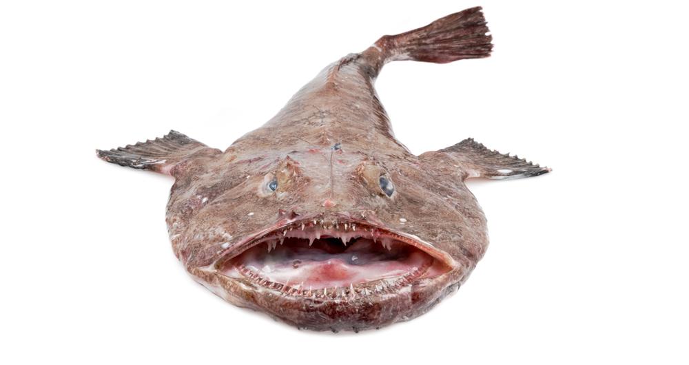 Bild eines Seeteufels